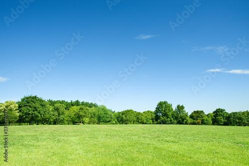 青空と草原と新緑の樹 Canvas