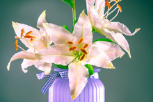Lily Flower Close-up. Light Pink Lily In A Vase. Lily Flower On A Swamp-colored Background. Garden Flowers. Perennial. Bulbous Plant. Delicate Flower In A Vase.