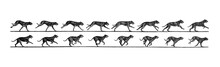 Composition Of Jumping Dog In Different Stages / Antique Illustration From Brockhaus Konversations-Lexikon 1908