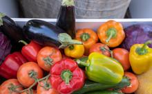 Large Chois Of Organic Vegetab...