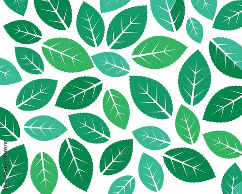 Obraz mint leaf illustration vector template - fototapety do salonu