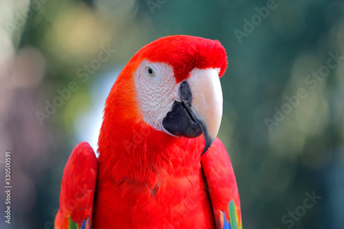 beautiful macaw parrot in zoo Wallpaper Mural