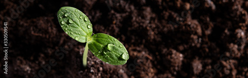 A young sprout grows from the soil with drops on the leaves. Top view.