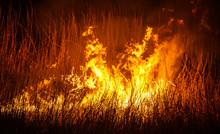 Field Firestorm At Night