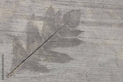 Fotografija Inlaid leaf in concrete on the sidewalk.