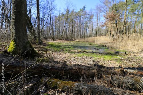 Fototapeta Swamps (Opalen lake) in Kampinos National Park, Mazovia, Poland obraz