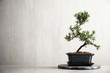 Leinwanddruck Bild - Japanese bonsai plant on light stone table, space for text. Creating zen atmosphere at home