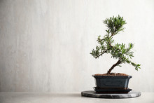 Japanese Bonsai Plant On Light...