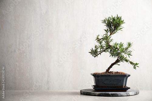 Japanese bonsai plant on light stone table, space for text. Creating zen atmosphere at home
