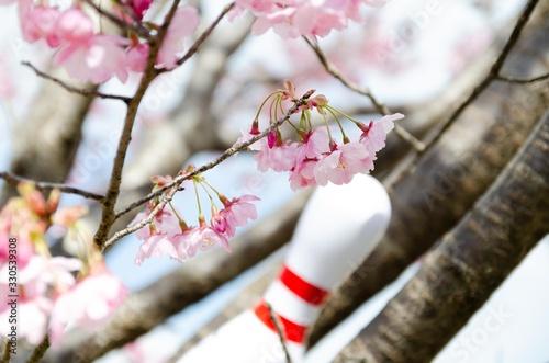 Photo 桜の花とボウリングのピン