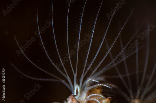 Barnacles filtering plankton from the water. Canvas Print