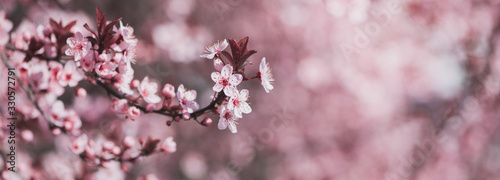 Leinwand Poster Pink spring blossoming branch wide background