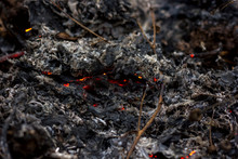 Scorched Earth, Burnt Grass Cl...