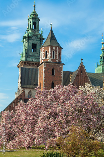 Wawel cathedral with blossom magnolia at spring time, Krakow, Poland