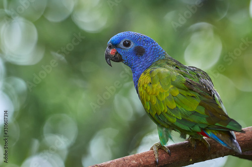 Cuadros en Lienzo Beautiful parrot on a branch of a tree