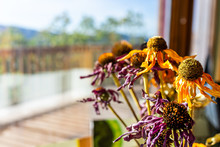 Dry Yellow And Purple Daisy Flowers Arrangement Bouquet By House Window With Sunlight And Patio Deck Macro Closeup