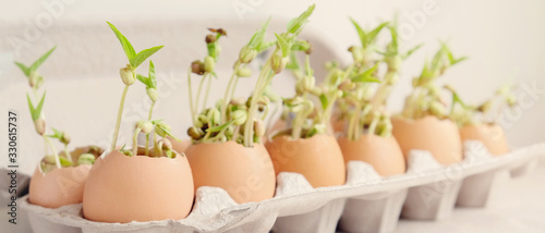 seedling plants in eggshells, eco gardening, montessori, education, reuse ,Eco g Tapéta, Fotótapéta
