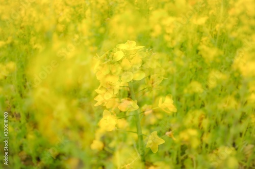 Yellow flowers growing next to each other during daytime