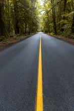 Highway Through Ttrees