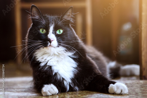 Black and white cat lies Fototapete