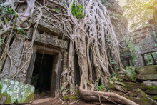 Tree Roots Cover A Historic Kh...