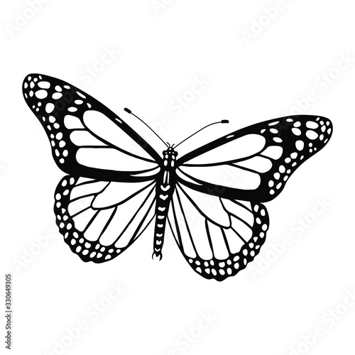 Danaus plexippus silhouette isolated on white background. Vector. Tapéta, Fotótapéta