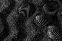 Black Shell On A Black Sand D...