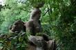 "Leinwanddruck Bild - Bomarzo (VT), Italy - May 15, 2016: The ""Sacro Bosco"" park and garden in Bomarzo, Viterbo, Lazio, Italy"