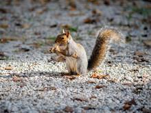 Sweet Squirrel Eating Peanuts
