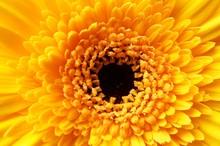 Closeup Shot Of A Beautiful Ye...
