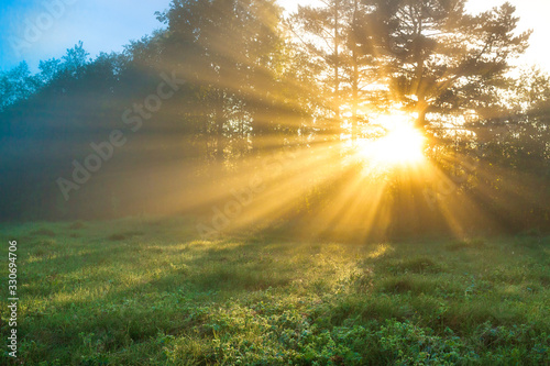 amazing landscape with sun and forest and meadow at sunrise