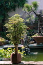 Unique And Simple Chinese Bonsai
