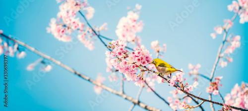 Photo 桜にメジロ