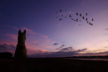 Lonely Dog Watches Flying Bird...
