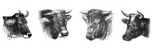 Cow And Bull Banner Collage / ...