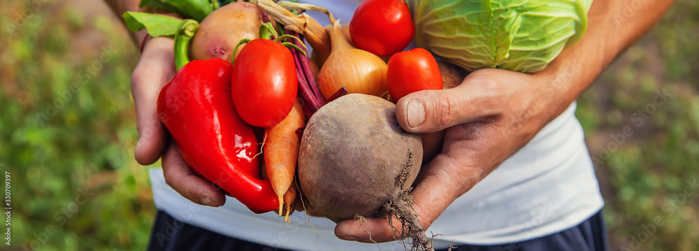 Fototapeta Man farmer with homemade vegetables in his hands. Selective focus.