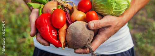 Obraz Man farmer with homemade vegetables in his hands. Selective focus. - fototapety do salonu