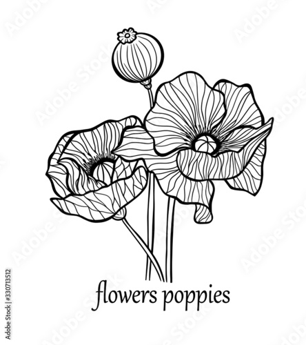 greeting card banner flowers poppies bouquet plant graphic outline stroke vector nature print wrap illustration - 330713512