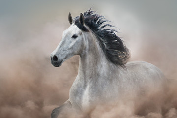 Grey horse in motion