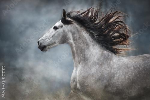 White horse portrait with long mane on dark background