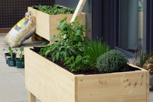 Home Made Raised Bed With Different Herbs On A Balcony
