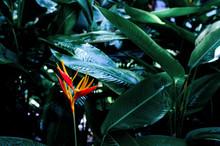 Colorful Flower On Dark Tropic...