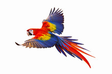 Colorful Macaw Parrot Isolated...