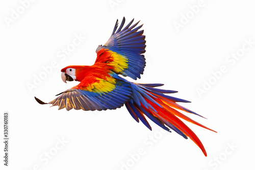 Colorful macaw parrot isolated on white. Canvas Print