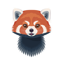 Funny Red Panda Portrait On Wh...