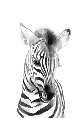 FototapetaZebra print • Safari nursery decor • PRINTABLE art • Safari animals wall art • Baby zebra • Safari theme • Nursery wall art • Baby animal prints
