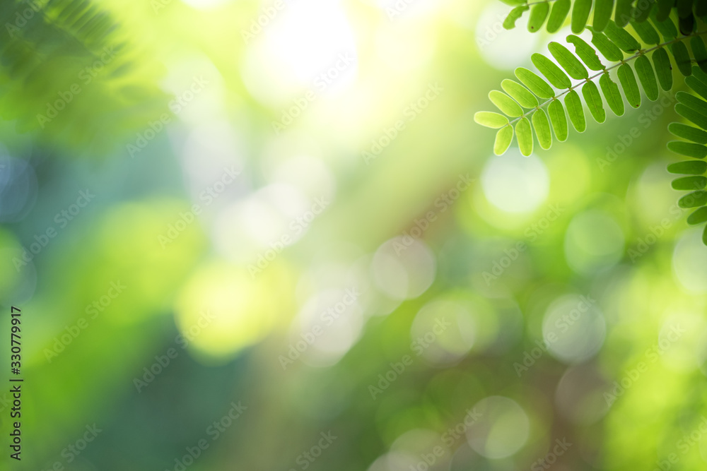 Fototapeta Closeup beautiful view of nature green leaf on greenery blurred background with sunlight and copy space. It is use for natural ecology summer background and fresh wallpaper concept.