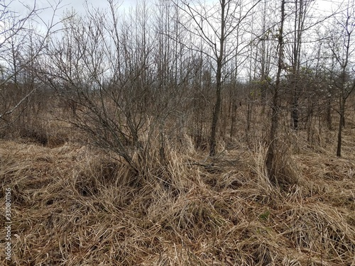 brown grasses and plants and trees outdoor