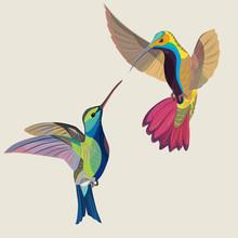 Vector Illustration Of Two Hummingbirds In Flight