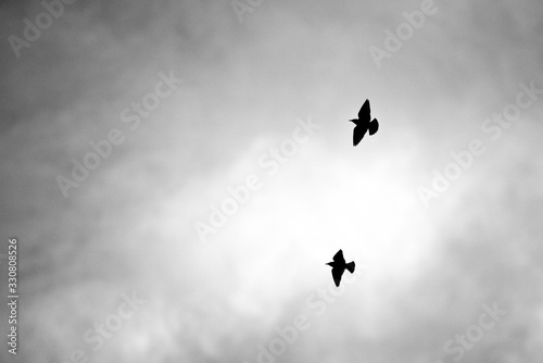 Photo Silhouette of two birds in flight